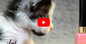 VIDEO: This Micro-Mini Kitten Was Determined to Defy the Odds