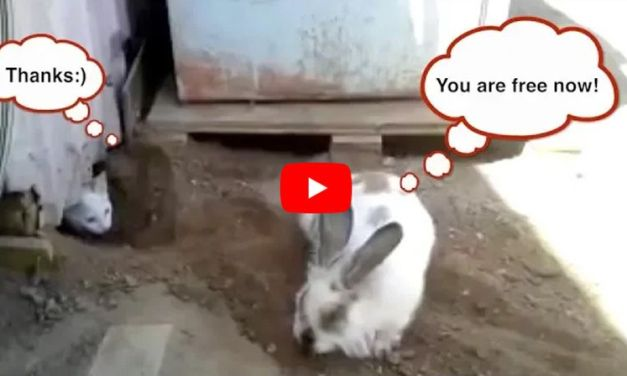 VIDEO: Hero Rabbit Digs Tunnel to Save His Trapped Cat Friend