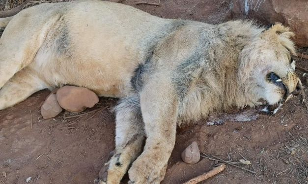 SIGN: Justice for Lion with Face Hacked Off by Poachers