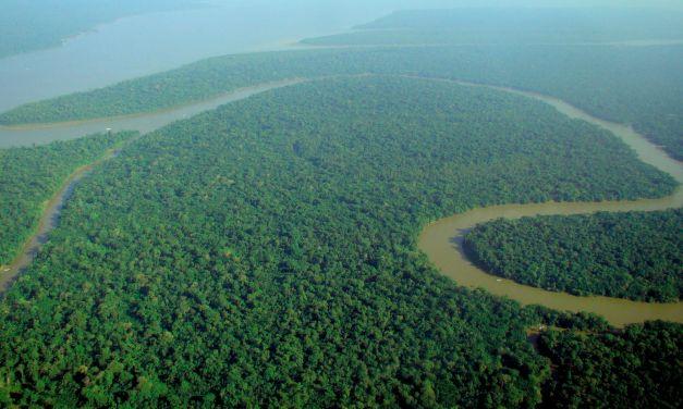 Saving the Amazon Rainforest (Still)