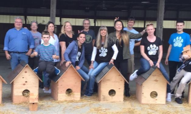 Volunteers Build Cozy Shelters to Keep Cats and Birds Warm This Winter