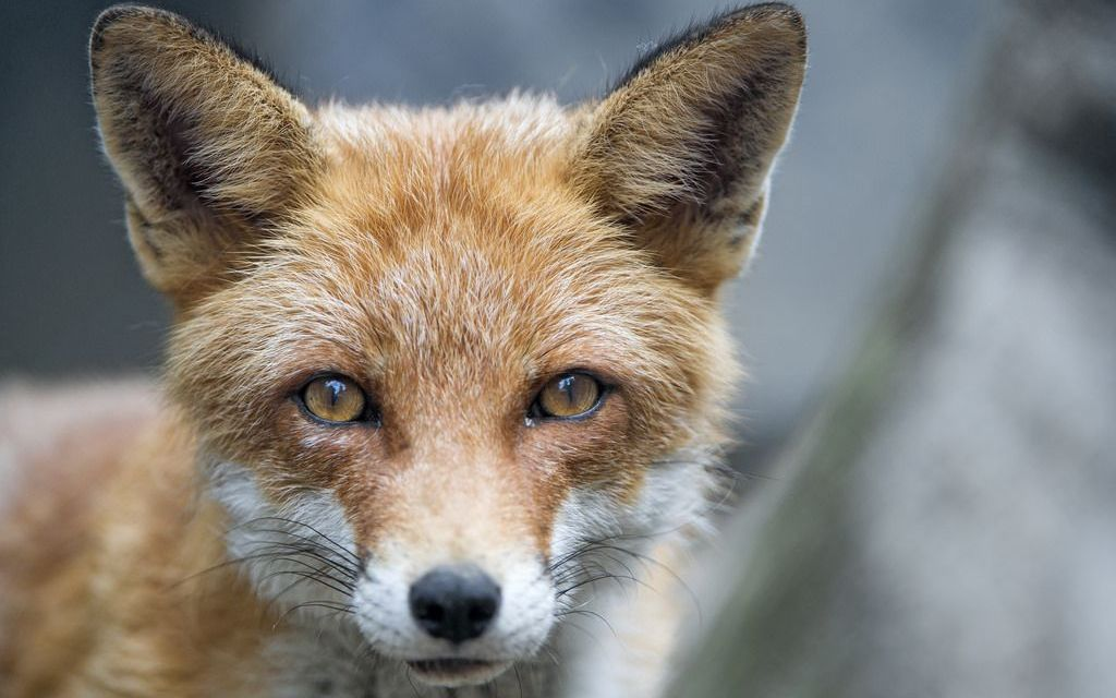 California Becomes the First State in the U.S. to Ban Fur!