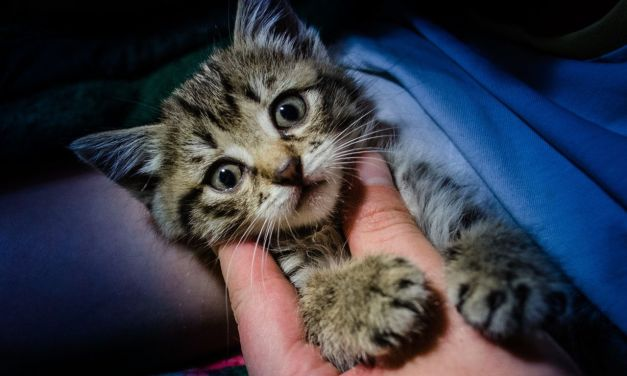 SIGN: Justice for Kitten Tortured and Killed for 'Animal Crush' Video