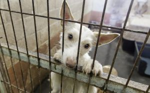 SIGN: Shut Down Illegal Dog Meat Slaughter in Gunsan, S. Korea