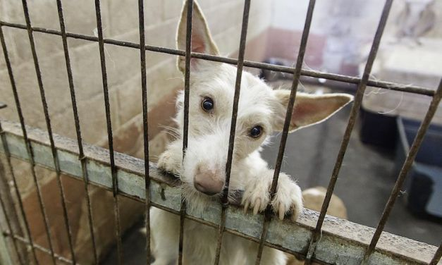 SIGN: Shut Down Illegal Dog Meat Slaughter in Gunsan, S. Korea