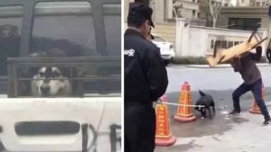 SIGN: Stop the Brutal Dog Genocide in Hangzhou, China