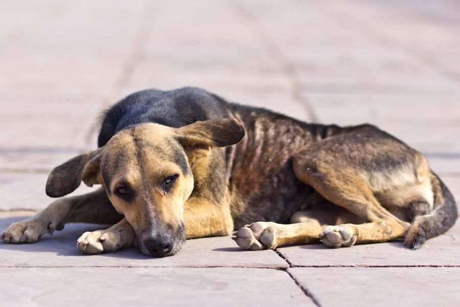 SIGN: Justice for Dog Tied Up and Gang Raped in the Streets