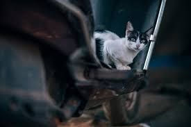 """Meet 'Sparky,"""" Kitten Rescued from Inside Car Engine"""