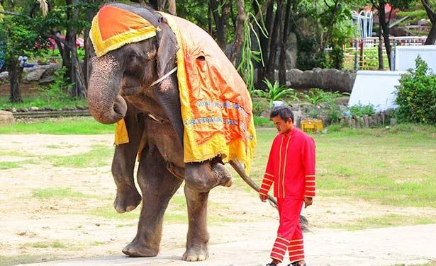 SIGN: Free Emaciated Elephants Forced to Perform at Cruel Zoo