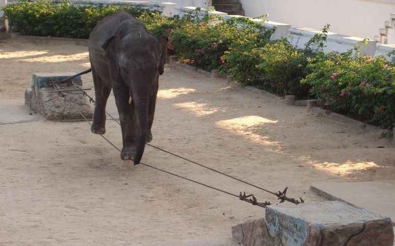 UPDATE: Thai Zoo Ordered to Temporarily Halt Performances for Emaciated Elephants