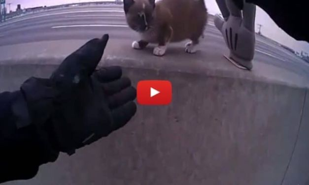 VIDEO: Bodycam Captures Breathtaking Moment Cop Saves Kitten Trapped on Highway