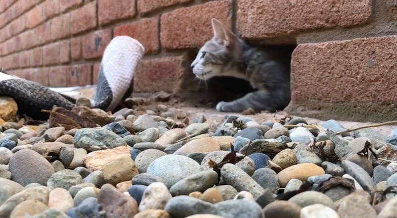 'Superhero' Handyman Frees Kitten Trapped in Brick Wall for 3 Days