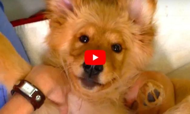Video: They Said This Puppy Would Never Be Able to Walk – Boy Did He Prove Them Wrong!