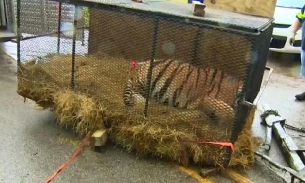 SIGN: Justice for Tiger Left Imprisoned in Cage in Abandoned House
