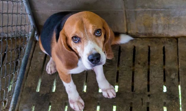 SIGN: Stop Breeding Puppies for Gruesome Medical Tests