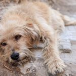 SIGN: Enact Mandatory Jail Time for Animal Cruelty