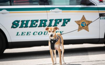 Chance the dog adopted as a deputy