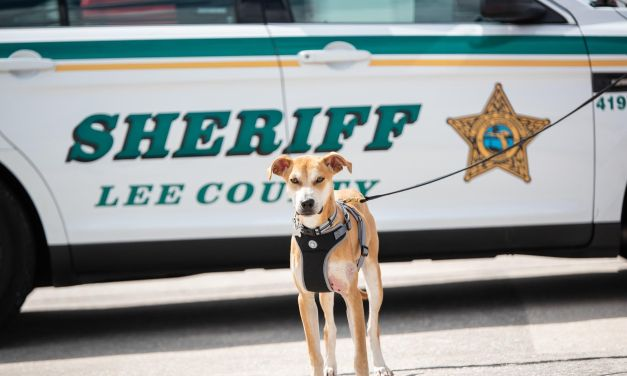 UPDATE: Dog with Mouth Taped Shut Sparks Crackdown on Animal Cruelty