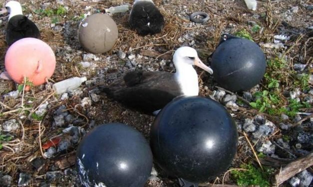 Plastic Balloons Kill More Seabirds Than All Other Trash