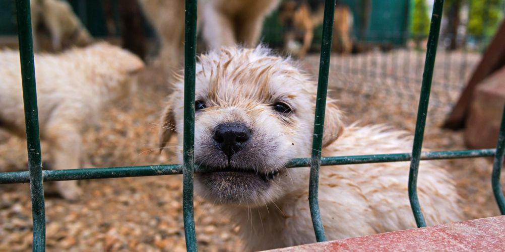 PETITION: Shut Down Puppy Mill of Horrors