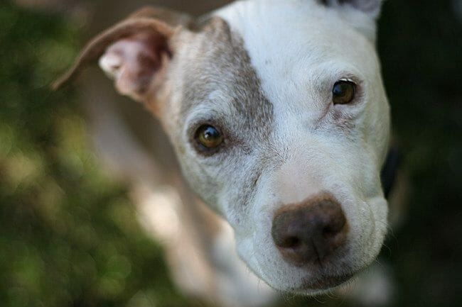 SIGN: Find Sick Person Dismembering Dogs and Leaving Body Parts for Families to Find