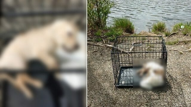 SIGN: Justice for Puppy Found Submerged in Pond Inside Weighted Cage