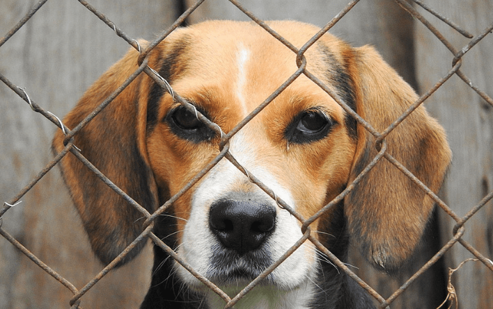 SIGN: Save Animals from Being Killed Like Trash Once Lab Experiments End
