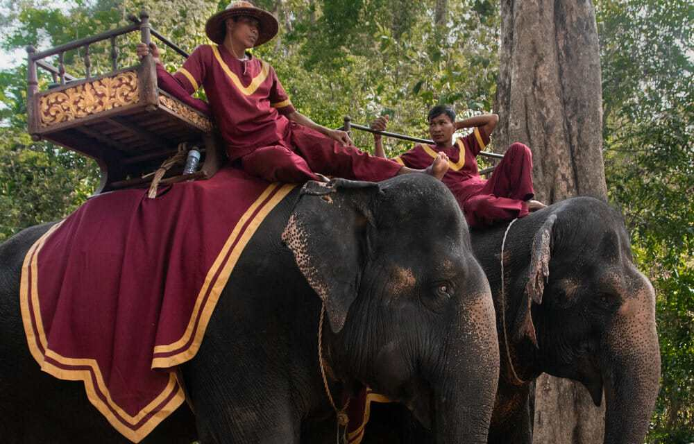 Victory for Elephants! Cambodia's Largest Tourist Attraction Is Banning Cruel Elephant Rides