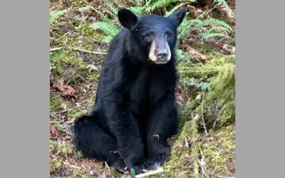 Black bear shot in Oregon