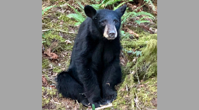 SIGN: Justice for Black Bear Shot Dead Just for Being Too Friendly