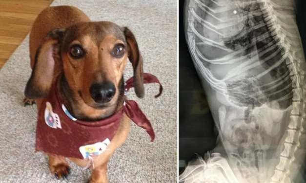 Sign: Justice for Buddy, Dachshund Shot Dead While Playing In His Yard