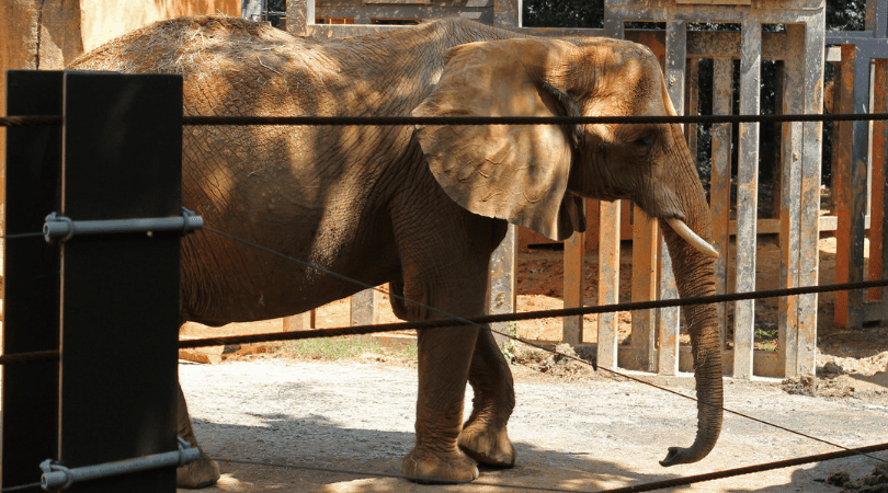This Zoo Is Finally Closing Its Cruel Elephant Exhibit for Good