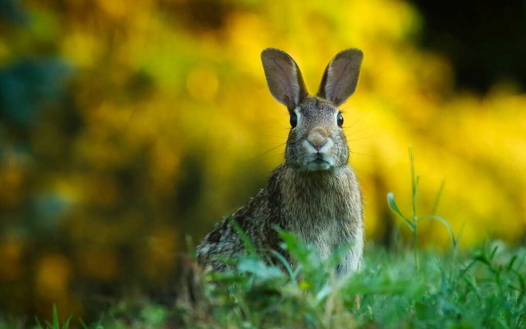 Scottish Lawmaker Proposes Bill to End Cruel Hunting of Foxes and Hares