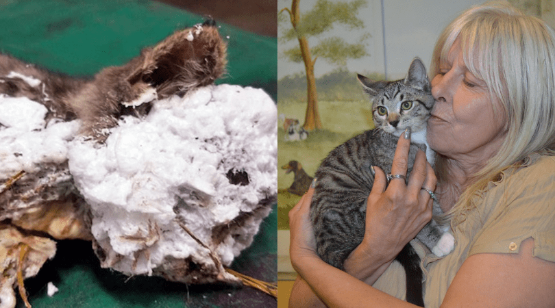 UPDATE: Kitten Cruelly Encased in Spray Foam Has Found a Forever Home