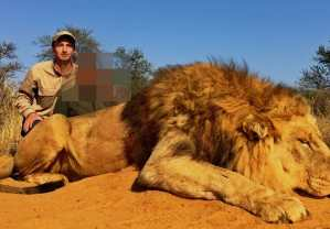 dead lion with trophy hunter