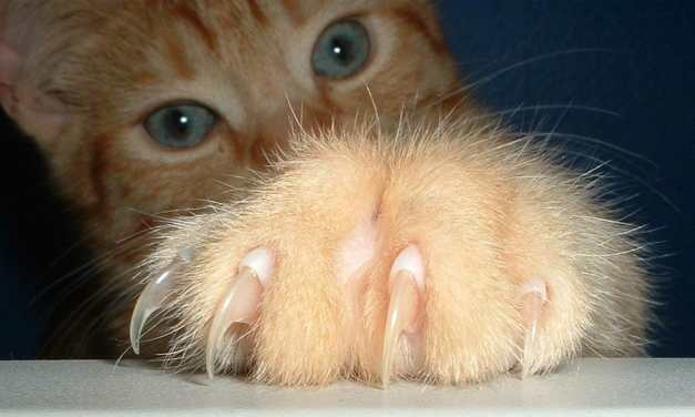 NY Becomes First State to Ban Cruel Cat Declawing