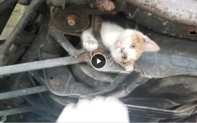 VIDEO: Hero Mechanics Save Kitten Stuck Hopelessly in Car Frame