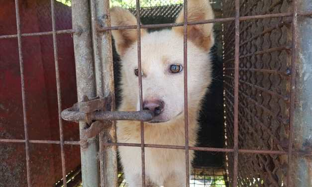 PETITION UPDATE: We Are One Step Closer to Ending Dog Meat in Gimpo, S. Korea