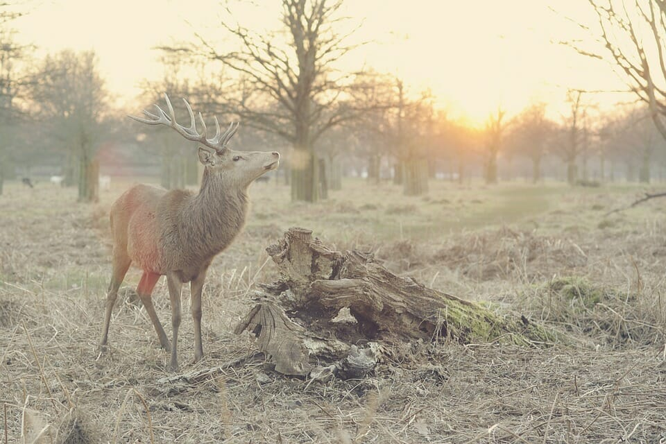 How Wildfires Are Devastating Precious Animal Populations