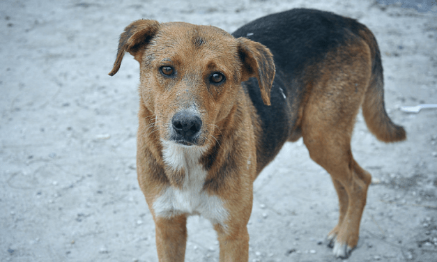 SIGN: Stop Horrifying Plan to Open A Dog Meat Market in Nairobi