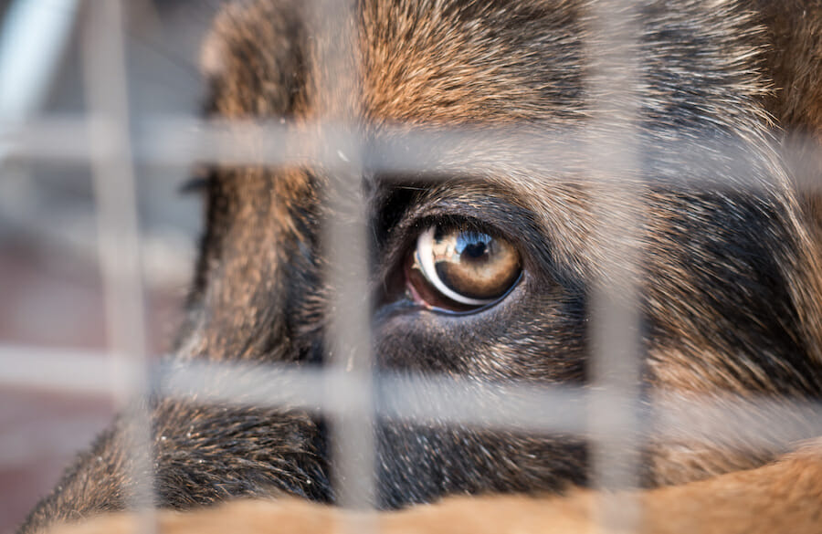 SIGN: Justice for Dog Locked in Crate and Left to Die in 110-Degree Heat