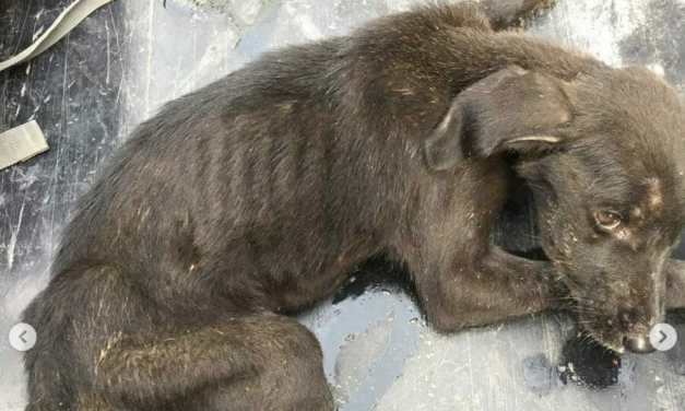 SIGN: Justice for Dogs So Desperate, They Are Eating Each Other to Stay Alive