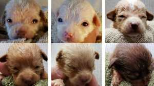 Tiny puppies abandoned in Coachella