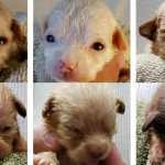 PETITION UPDATE: Woman who Dumped 7 Newborn Puppies into Coachella Dumpster Sentenced to Jail