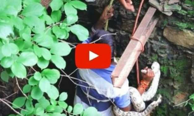VIDEO: Brave Animal Rescue Volunteer Saves Huge Python From Deep Well