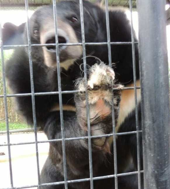 "Update: Virginia Judge Decrees Roadside Zoo ""Cruelly Treated"