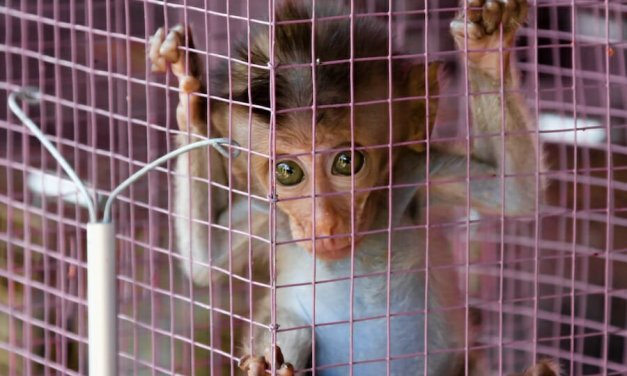 SIGN: Pass the Captive Primate Safety Act to Save Monkeys from Misery as 'Pets'