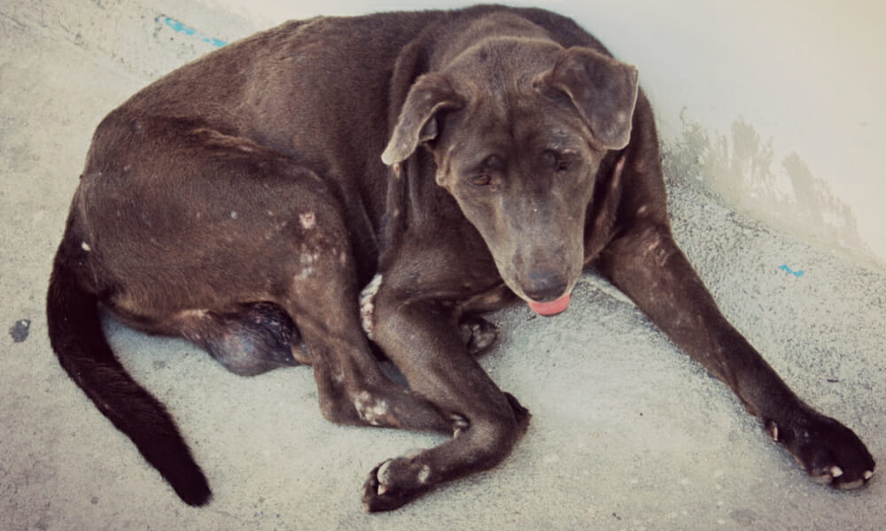 SIGN: Justice for Dog Roped Up in Basement to Starve in 'Slow, Suffering Death'