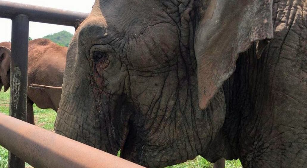 Ramba, The Last Circus Elephant in Chile, Is Now Safe At Her Sanctuary Home