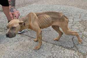 Skinny dog